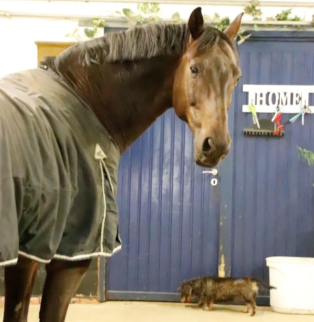Tijd besef is één van de grote psychische verschillen tussen paard en mens.